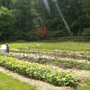 Veggie Patches, Organic Meals and Going Green @ CCB